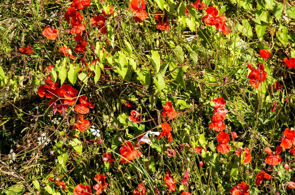 Le Bois des Mottes (Ardillières)